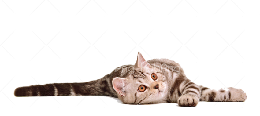 sleeping cat png Transparent Background Image for Free