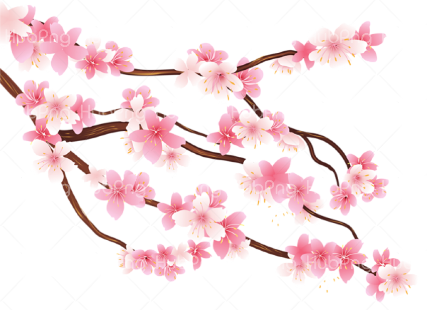 Spring Flower PNG image Transparent Background Image for Free