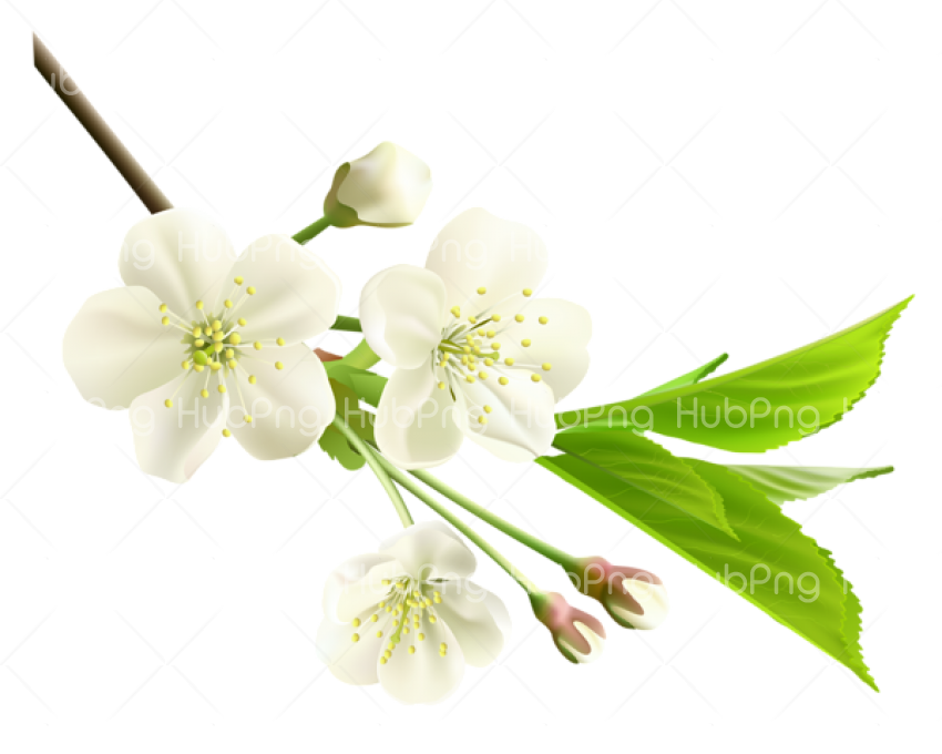 Spring Flower PNG Photos Transparent Background Image for Free