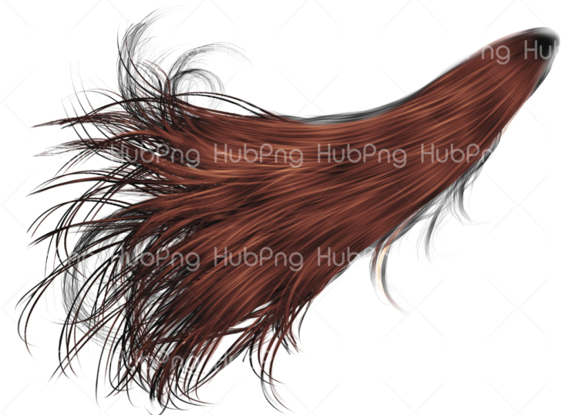 sr editing zone hair Transparent Background Image for Free
