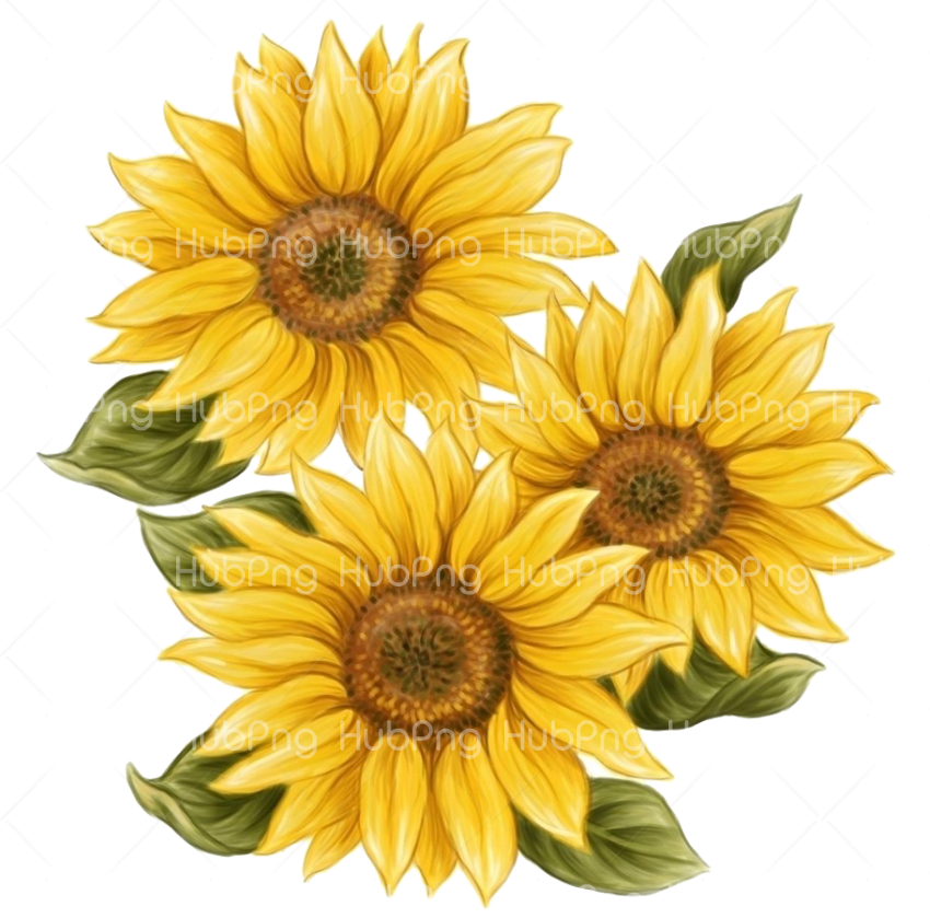 sunflower png paint Transparent Background Image for Free