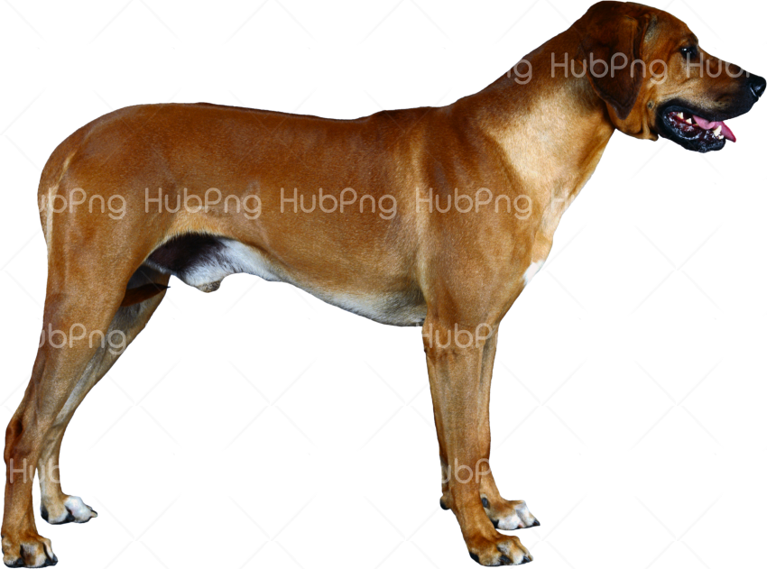 thine dog png Transparent Background Image for Free
