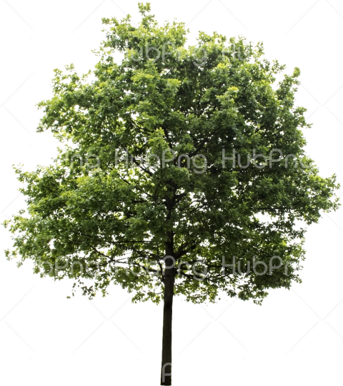 tree png Transparent Background Image for Free