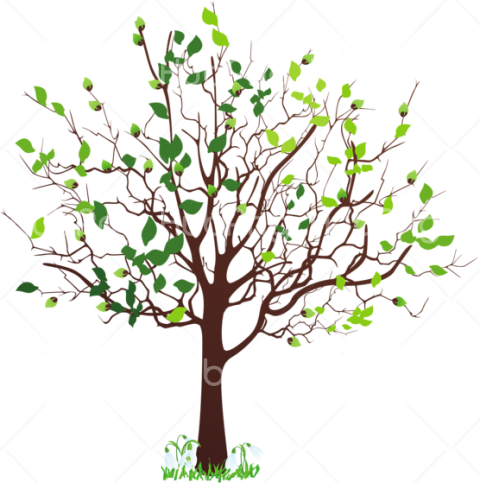 tree png clipart hd Transparent Background Image for Free