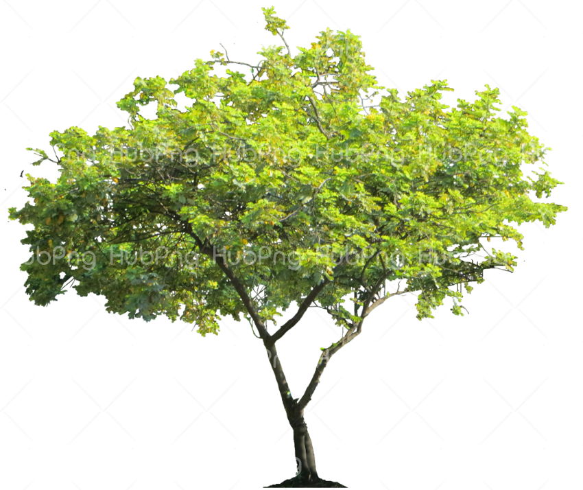 tree png green hd Transparent Background Image for Free