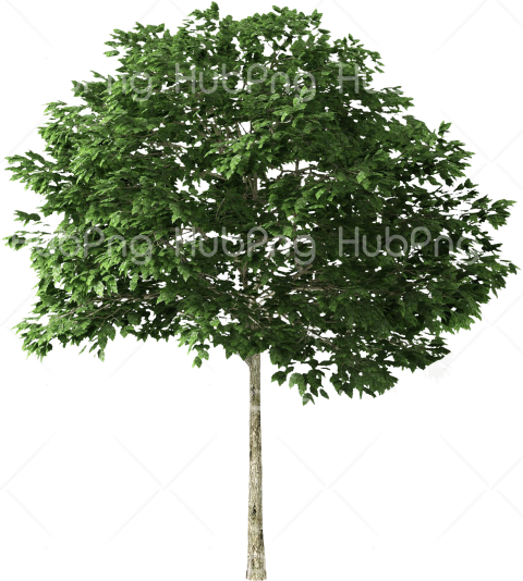 tree png hd Transparent Background Image for Free