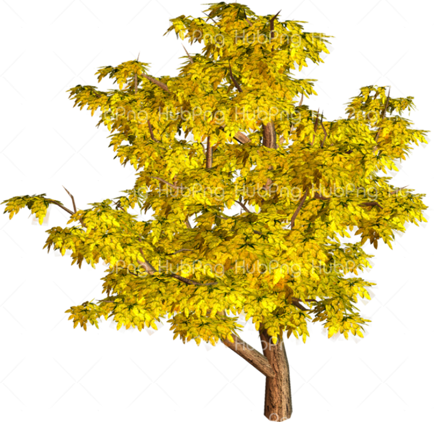 tree png yellow Transparent Background Image for Free