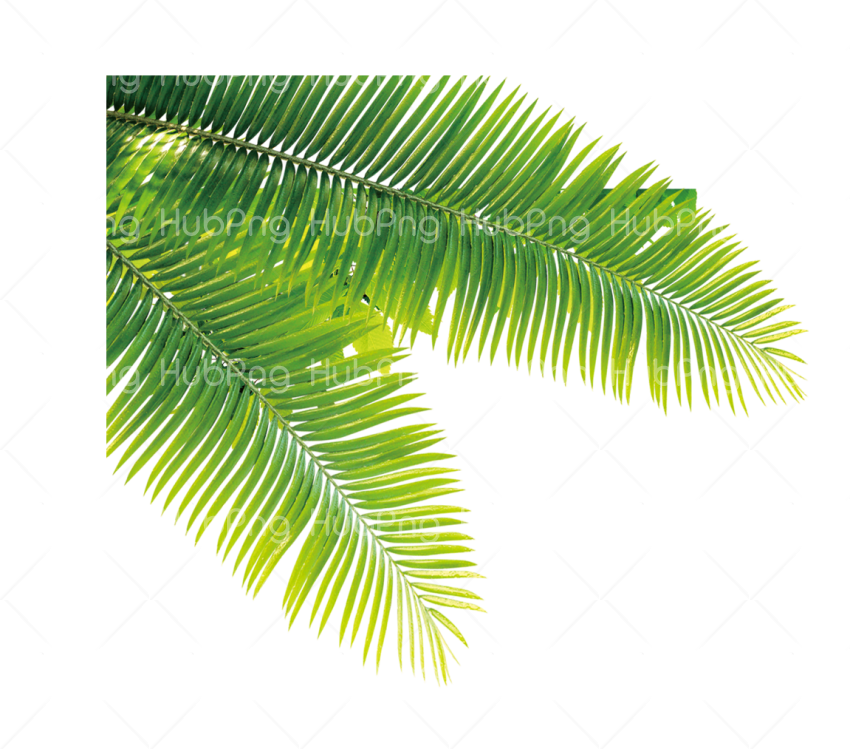 tropical png Transparent Background Image for Free
