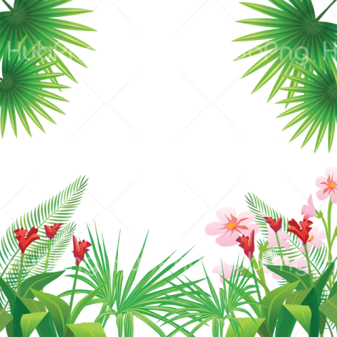 tropical png hd Transparent Background Image for Free