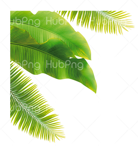 tropical png palm tree Transparent Background Image for Free