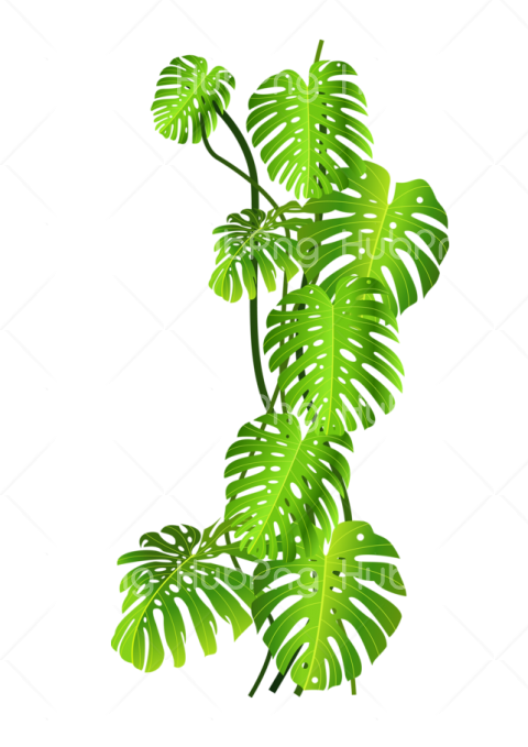 tropical png tree Transparent Background Image for Free
