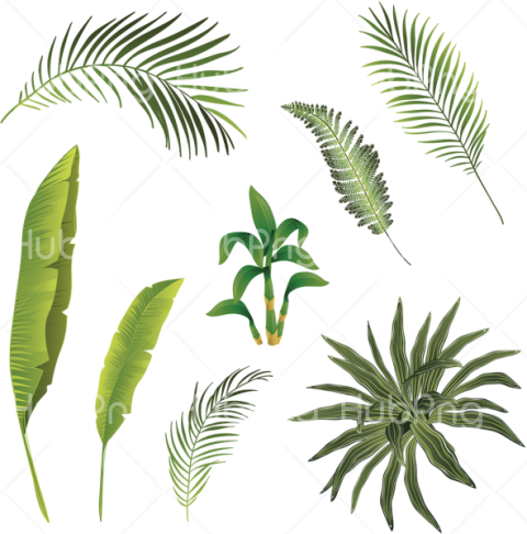 tropical png tree leafs Transparent Background Image for Free