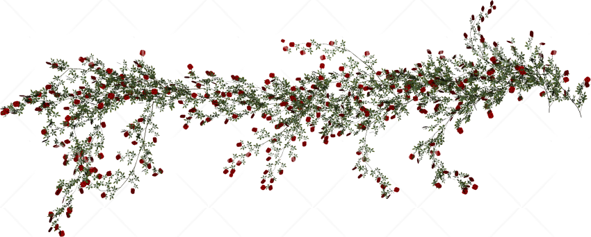 vines png hd Transparent Background Image for Free