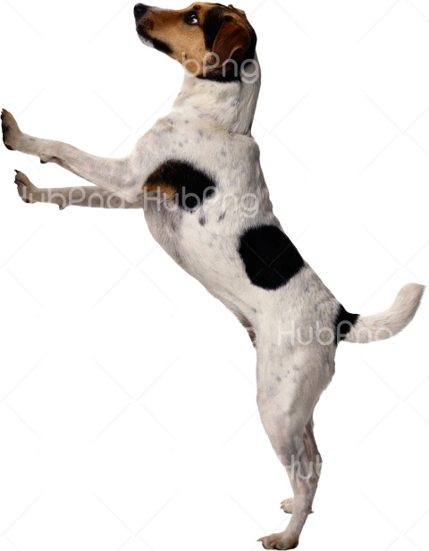 walk up dog png Transparent Background Image for Free