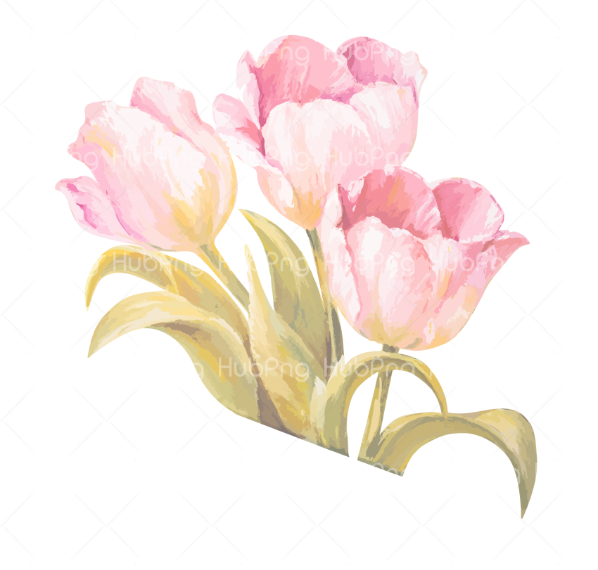 Watercolor Painting  Flower Ribbon - Pink Tulip png Transparent Background Image for Free