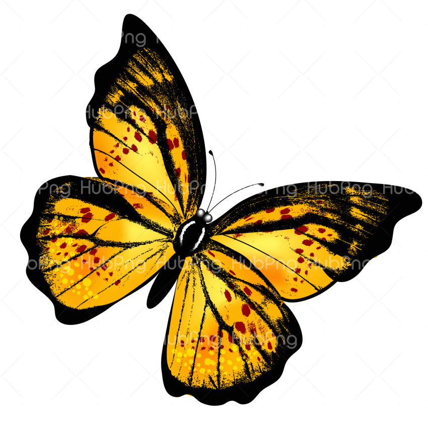 yellow butterfly png Transparent Background Image for Free