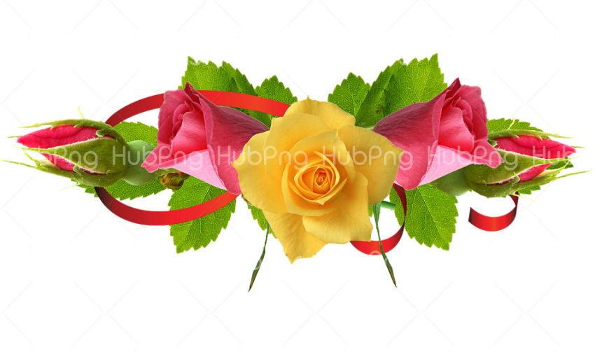Yellow Rose Flower png Hd Rose Png Transparent Background Image for Free
