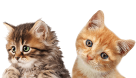 2 cats png transparent background