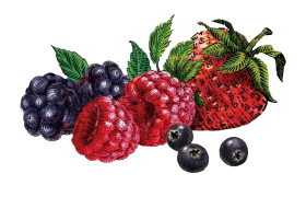 berries png clipart hd