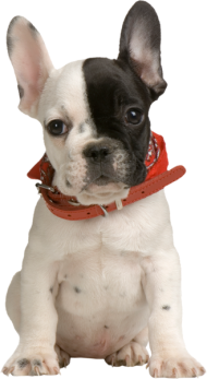 black and white dog png