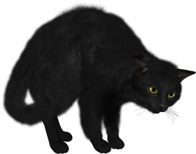 black cat png