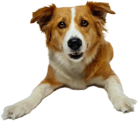 brown and white dog png