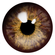 brown eye png