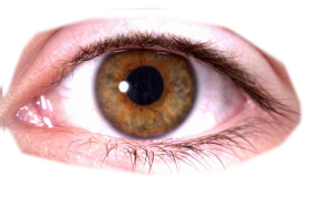brown real eye png