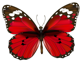 butterfly png red and black