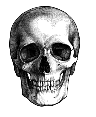 calavera png drawing