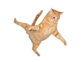 cat no background png
