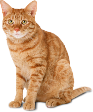 cat photo png