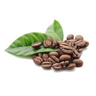 Coffee Beans clipart PNG