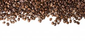 coffee beans png vector logo