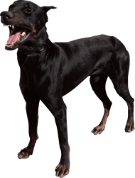 dangerous dog png