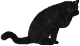 dark black cat png