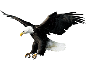 eagle png hd