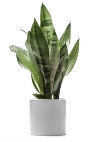 green plants png