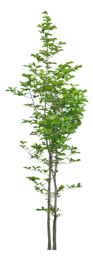 green tree plant png