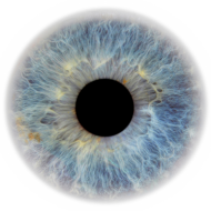 grey eye png