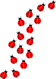 group of ladybug png