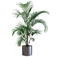 indoor green plant png hd