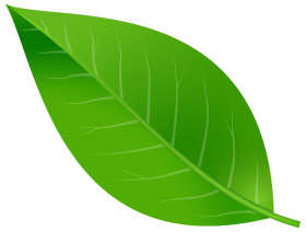leaf png green tree