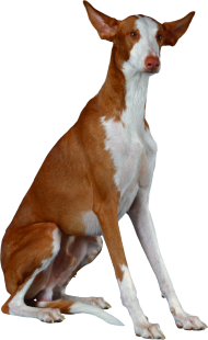 long dog png
