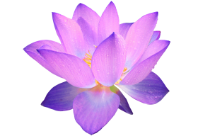 lotus flower PNG