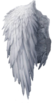 One angel wings png HD