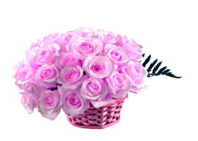 Pink Rose flower Rose Hd Wallpaper 50 Pink Roses png Basket
