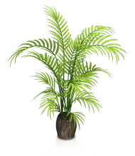 plant indoor png