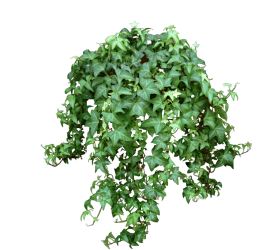 plant png hd