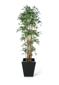 plant png home